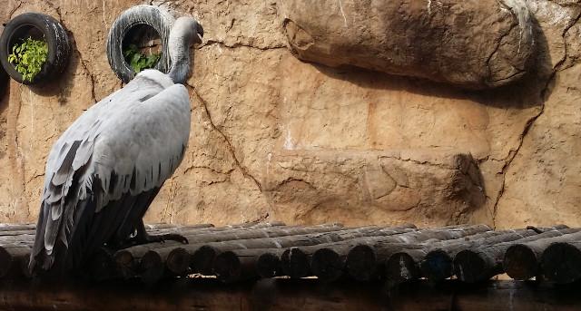 Poisoning animals for magic: Africa's 'vulture investors'